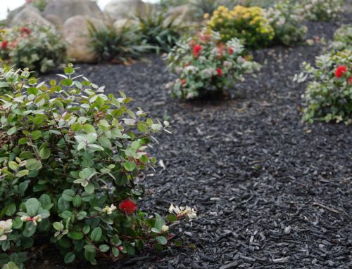 OUR GOODWOOD MULCHES ARE YOUR SOLUTIONS FOR SUMMER