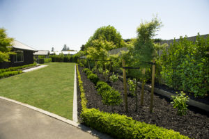 Black Mulch in garden right