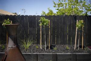 Black Mulch in garden with fence behind